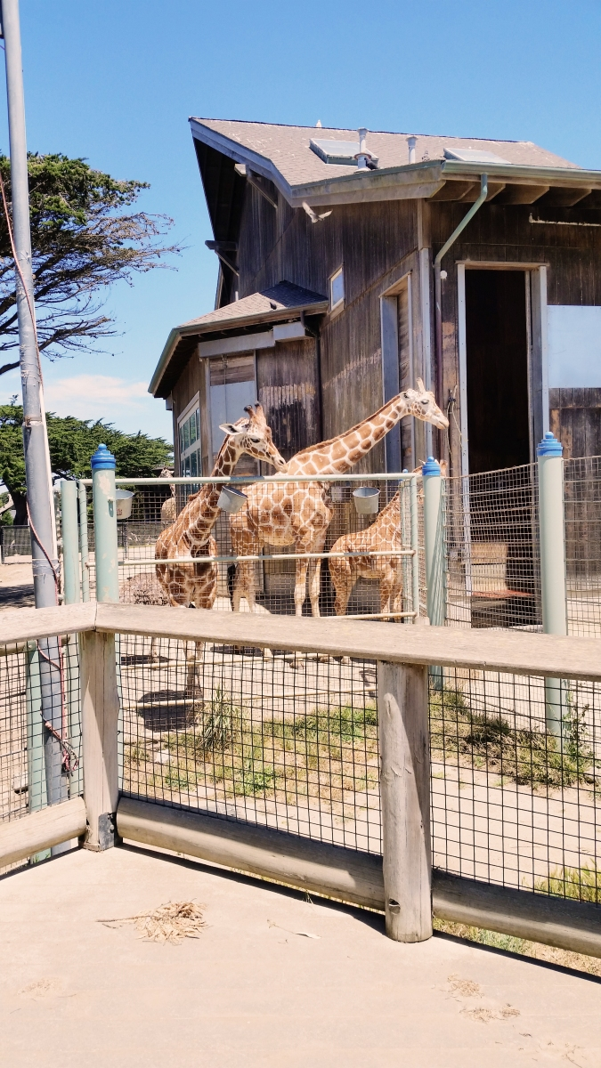 the domesticity of giraffes Download giraffe stock photos including images of hippo, hippopotamus, rhinoceros and rhino affordable and search from millions of royalty free images, photos and vectors.