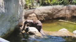 So this otter was playfully swimming behind a fish. We all thought they were buddies. So cute! Until the otter pounced on the fish and dragged it out the water...