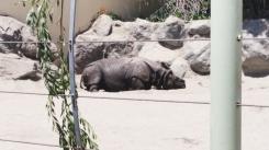 Poor rhinoceros needs water.